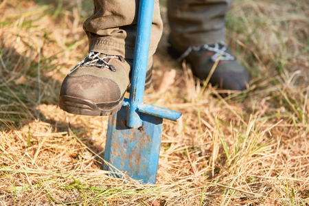 Forestry or forest worker digging with the spade for reforestation