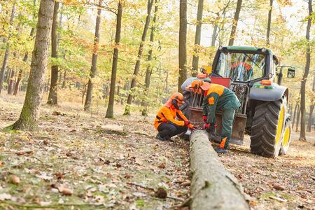 Lumberjacks carry a tree trunk with the forwarder in the forest district