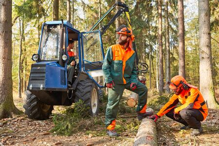 Lumberjacks at the tree fell after wood harvest with forwarders to the wood back