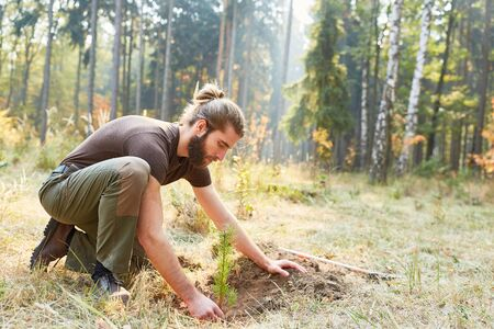 Forester at the pine tree plant for reforestation in the forest 스톡 콘텐츠 - 128302345