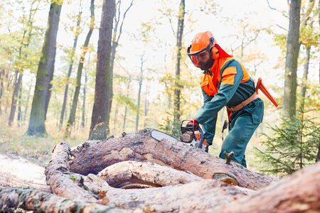Forest worker as a lumberjack in protective clothing saws tree trunk with the chainsaw 写真素材