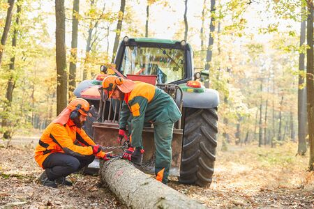Two forest workers or lumberjacks in the wood back with the forwarder in the forest 写真素材