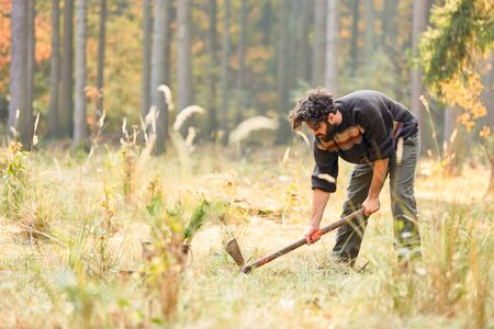 Forest worker digs a hole for the pine seedling with the Wiedekopfhaue Stockfoto
