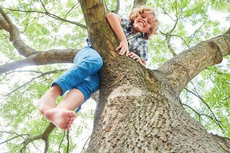 Blond boy proudly climbs a tree in the park in summer vacations