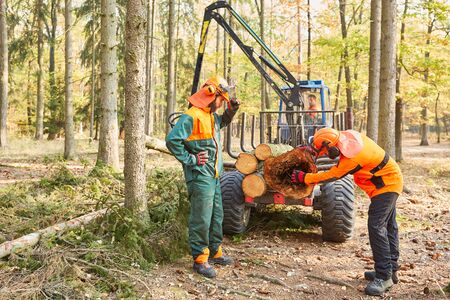 Two forest workers control pest infestation on a felled tree