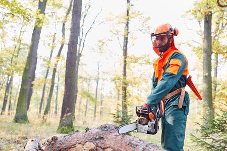 Forest worker as a lumberjack in protective gear with chainsaw at the tree fell Stock Photo