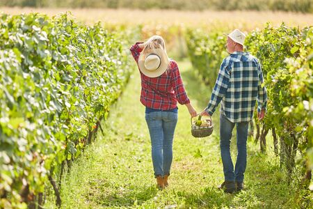 Young couple on a summer outing in the vineyard with picnic basket