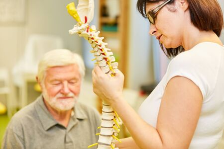 Physiotherapist shows and explains seniors in a back school a spine model