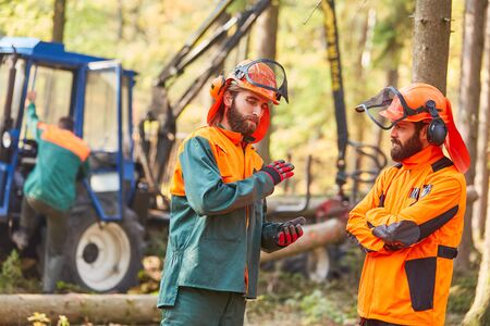 Forest workers as lumberjacks plan the wood back after the harvest in the forest