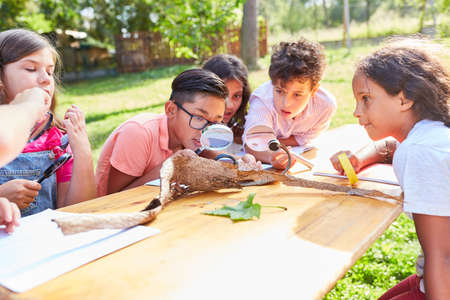 Group of children at the ecological summer camp look at tree bark through a magnifying glass
