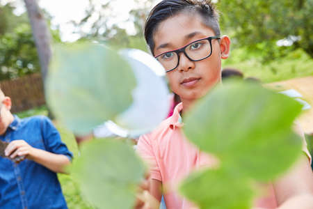 Children look through magnifying glass at a leaf in summer camp and learn about natural history