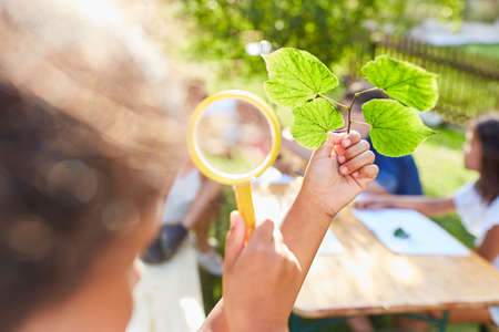 Children look at leaves through a magnifying glass in the nature conservation project in the summer school