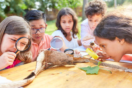 Group of children looks at tree bark through the magnifying glass in the nature conservation project