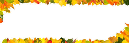 Colorful autumn leaves as a frame for panorama header banners