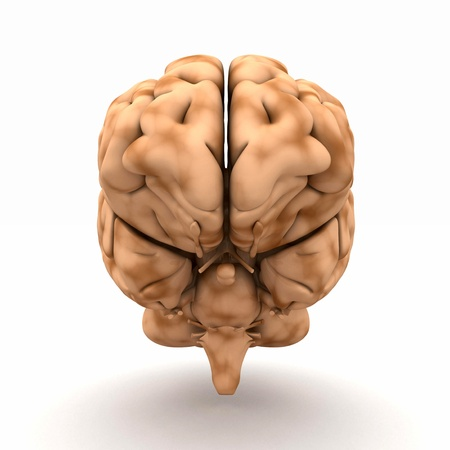 Brain - a view from the front Stock Photo - 13843999
