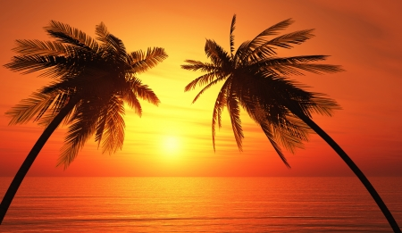 Two palm trees on beach photo