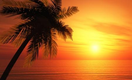 palmeras: Tarjeta de felicitaci�n Tropical - La playa de ensue�o