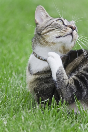 The cat in the grass - My necklace itches Stock Photo - 14266688