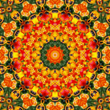 energy healing: Flower Mandala  Stock Photo