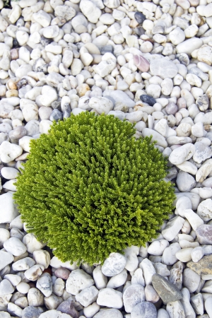 modern garden: Green plant on pebble