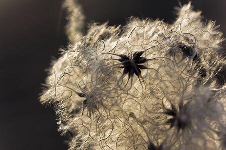 Pollen in soft lens Stock Photo - 14621062