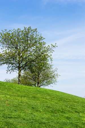 The Trees on the hill gel