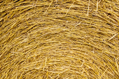 Round bales of straw background photo
