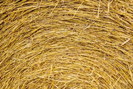 Rundballen aus Stroh Hintergrund Standard-Bild