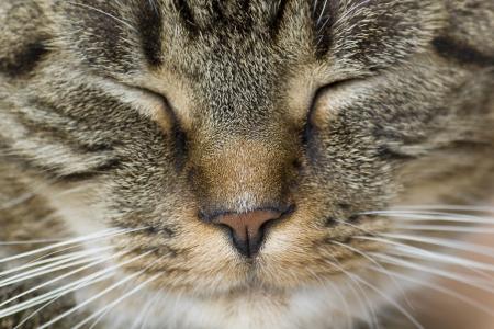 Sweet Kitty Face
