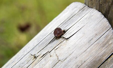 curren: The rusty pin in the wood pile Stock Photo