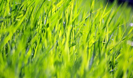 wellness environment: Fresh green grass in the back light Stock Photo