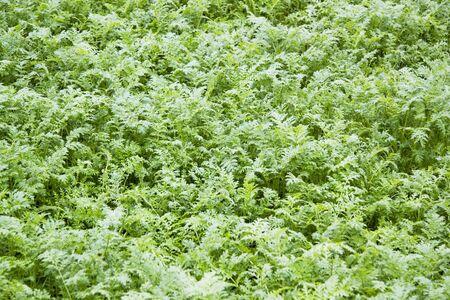 backplate: Herb garden background Stock Photo
