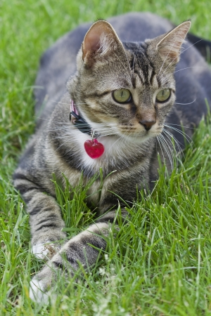 The little cat in the grass Stock Photo - 15571359
