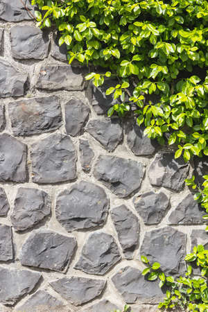Half stone wall - half vertical plant photo