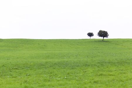 reported: Green grassy hill with two trees - exempt