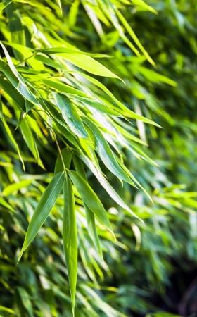 backplate: Fresh green bamboo backplate
