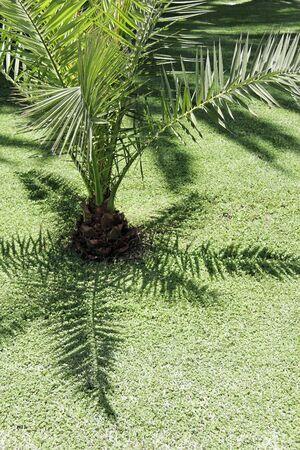 palm garden: Palm Garden Section