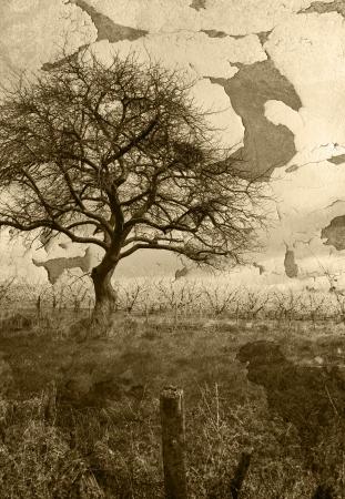 condolence: Grunge tree landscape
