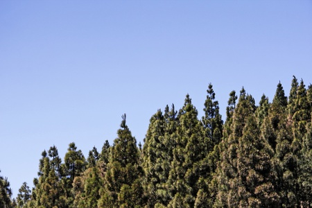 backplate: Half forest semi sky
