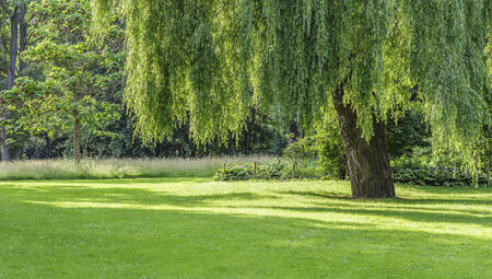 The tree in the park Stock Photo - 25681151