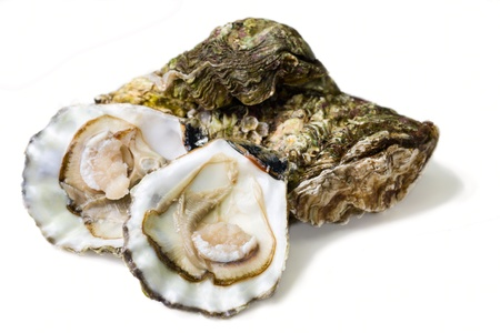 fresh alive oysters on a white background