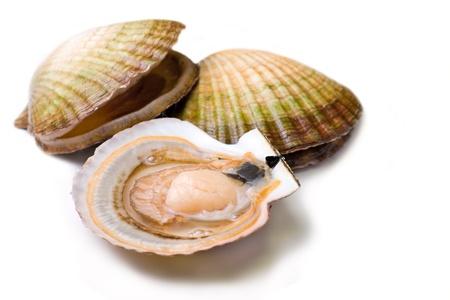 Meeresfrüchte: Live Jakobsmuscheln (Pecten maximus). Isoliert auf weißem Hintergrund. Standard-Bild - 12728809