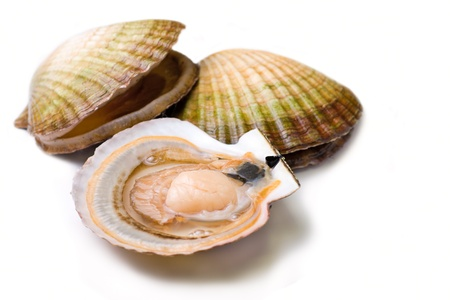 Seafood: live scallops (Pecten maximus). Isolated on white background.
