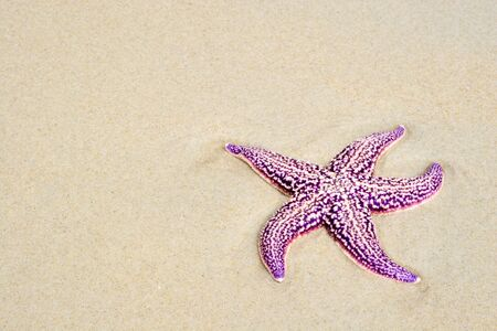 water's edge: Russia. Sea reserve. A starfish laying on a sand beach.