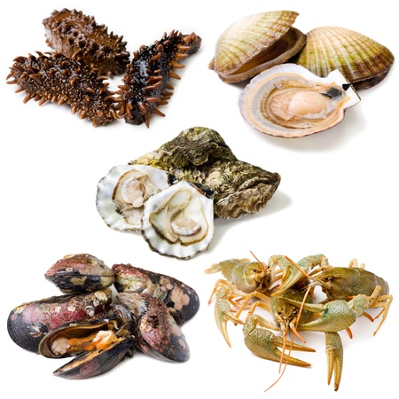 Group of fresh alive seafood: trepang (tripang, stichopus japonicus), scallops (Pecten maximus), oysters, mussels and crawfishes. Isolated on white background.