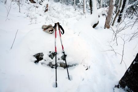 nordic ski: trekking poles at winter forest