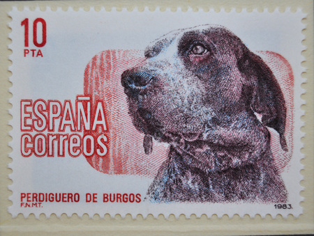familiaris: Burgos retriever, postage stamp