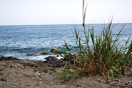 canne: canne in riva al mare