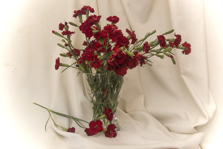 vase with red carnations on fabric background