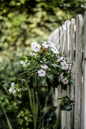 flowers on pot hanging of the fence